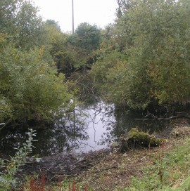 Overgrown Mystery Pond; before tree removal