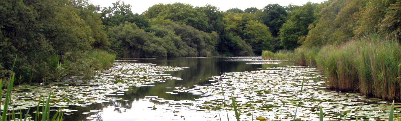 Wake Valley Pond, Epping Forest